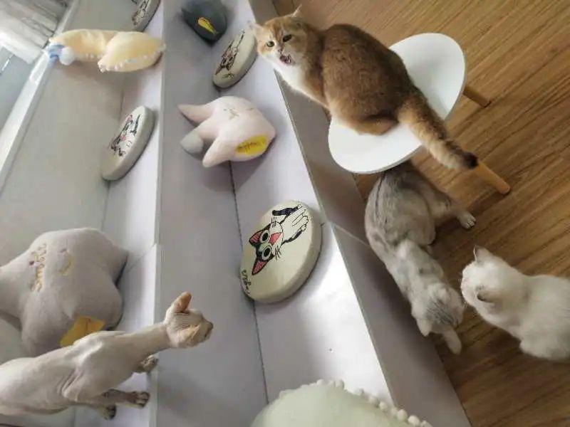 【萌宠天堂】19.9元享门市价68元【佩蒂萌宠沙龙·宠咖】优惠套餐,撸猫+桌游畅玩+茶水自助!和喵星人慵懒度过曼妙时光!一起吸猫!