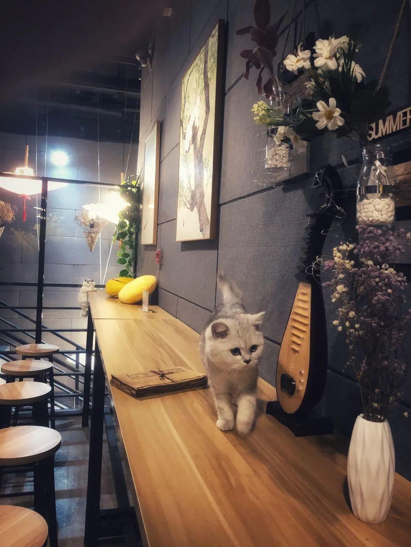 【吸猫圣地丨五大道周边丨地铁直达丨元旦适用】29.9=两杯奶茶+两份小吃+撸猫桌游门票+…【茶喵喵】集撸猫、下午茶、桌游于一体的好地方,快叫上小伙伴一起来吧!