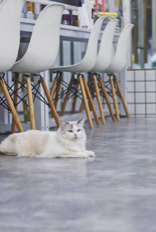 【2店通用】撸猫小时光,19.9元享门市价110元【御猫堂】精品猫咖,不限时撸猫+饮品四选一杯(加五块可置换猫零食一份)