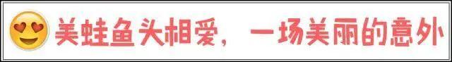 【百家湖新店开业,2店同庆,预售11月6日可用】双倍的快乐来啦!69元享【二喜】单人鱼蛙不限量自助火锅!三十多种涮菜+水果+特色冰粉+免费饮料啤酒~