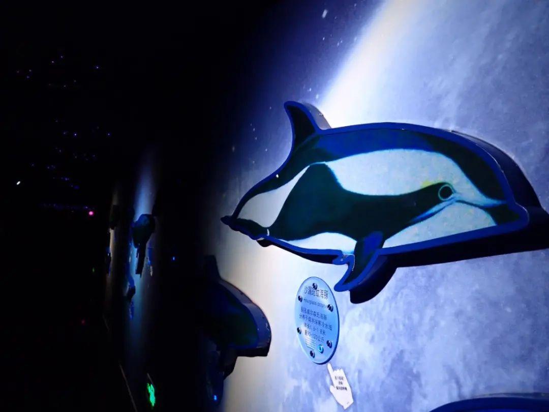 【无需预约 | 工体富国海底世界】富国海底世界来啦!仅158元享门市价390元的【富国海底世界】两大一小家庭票!探秘海洋,斑海豹、喂食海龟,亲历海底两万里,海洋萌主驾到,嗨翻圣诞新年季,等你打卡!