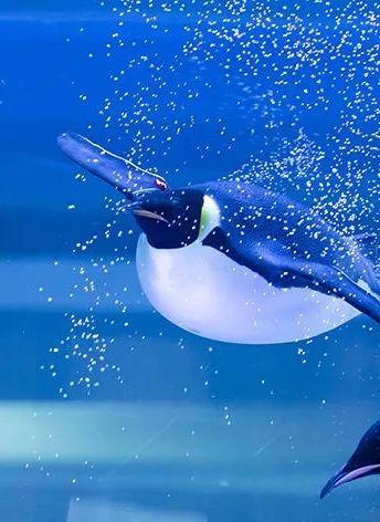 【上海海昌海洋公园】999元起享双人深度畅玩上海海昌海洋公园,海洋梦幻世界和欢乐的游乐园的综合体,一园多种体验!尊享一晚海昌海洋公园度假酒店【海豚高级房】!!!2日无限次快速入园,免排队!方便,省心,快捷!!与宝贝们步入梦幻的海底世界~共度温馨的亲密时光~