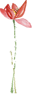 【星沙】健康美食打卡地!仅需239元享772元【鱼湘老铺8-10人餐】时尚裸奔虾、生态肉丸汤、青椒五花肉炒鲜鲍、招牌刨盐鱼......